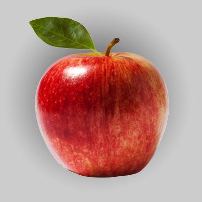 Apple Cold Storage Room