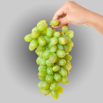 Grape Cold Storage Room