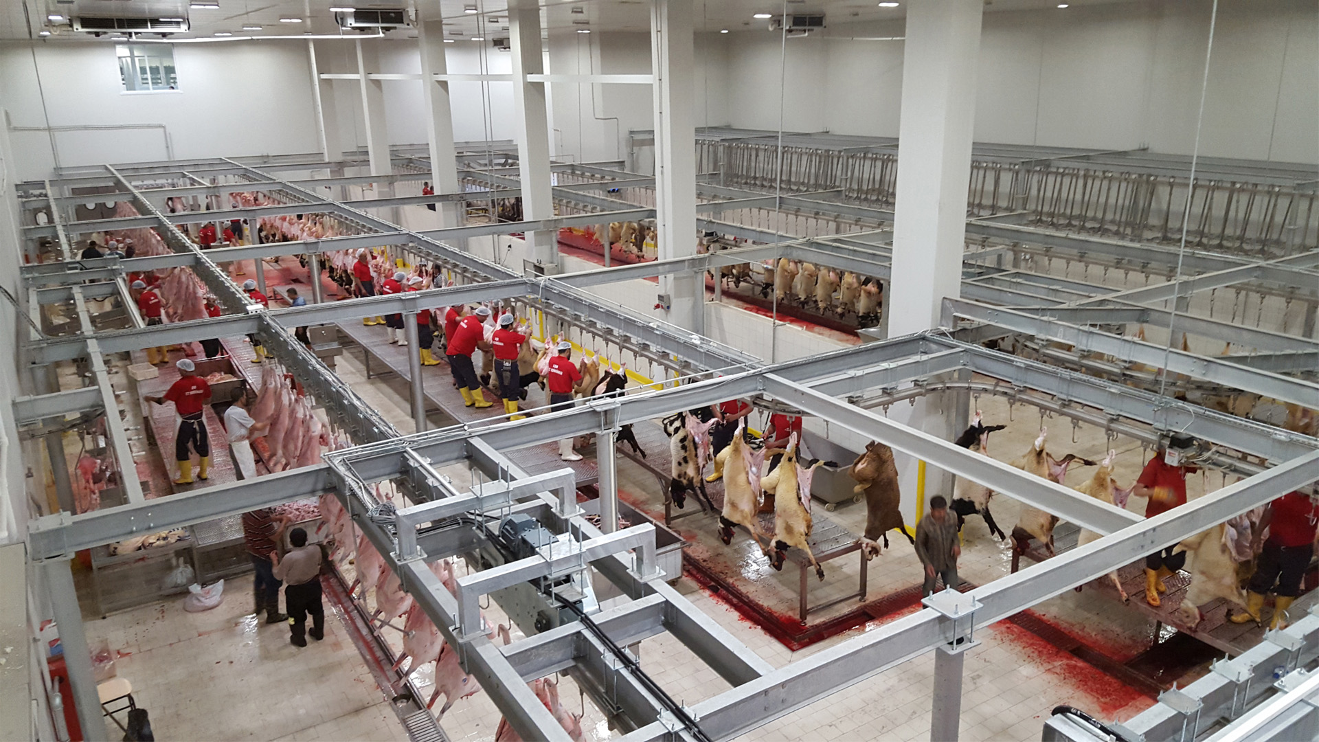 Slaughterhouse and Meat Processing Plants