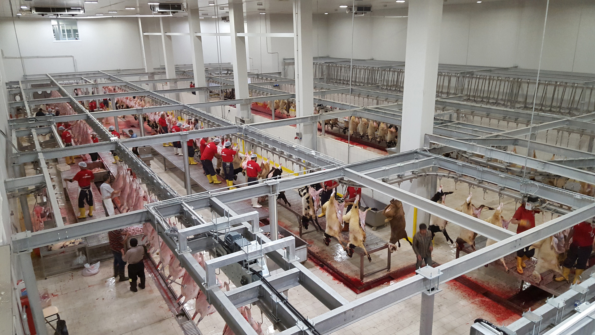 Red Meat Slaughterhouse and Processing Facilities