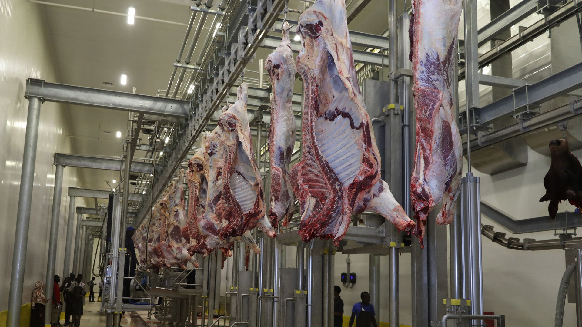 We completed the construction of one of the largest slaughterhouses in Africa